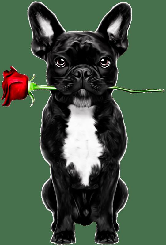 Bulldogge Rose min